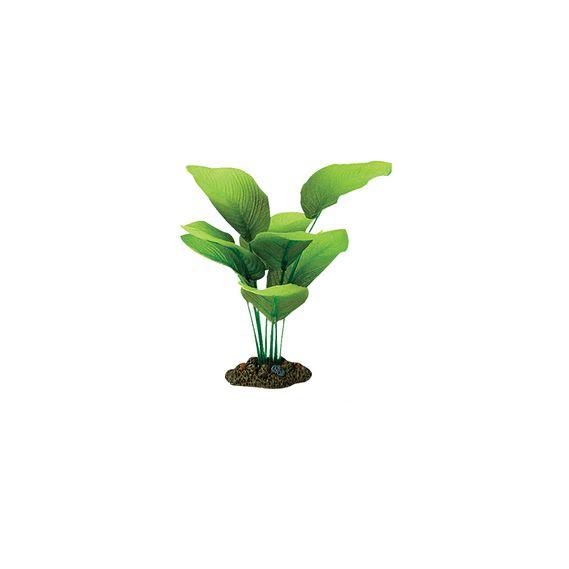 Planta-Sword-Radicans-13-Cm