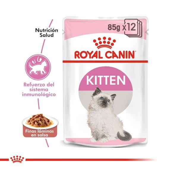 kitten-1000x1000