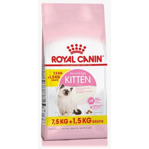kitten-bonus--2-